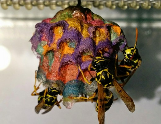Colorful Wasp Nest Stage 5