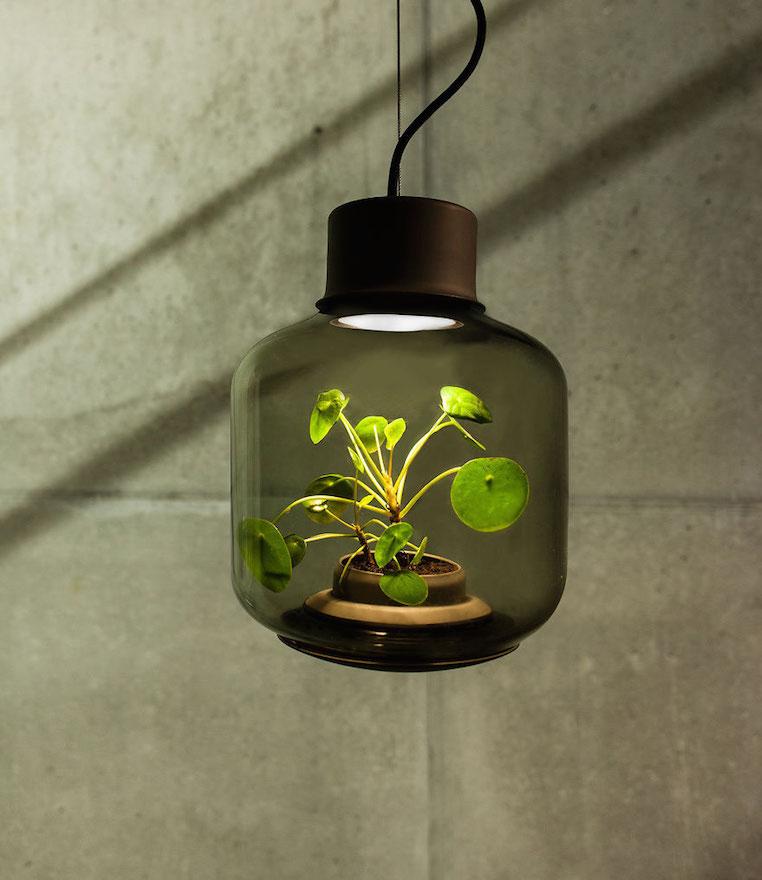 Nui Studio Mygdal Plant Lamp Pendant
