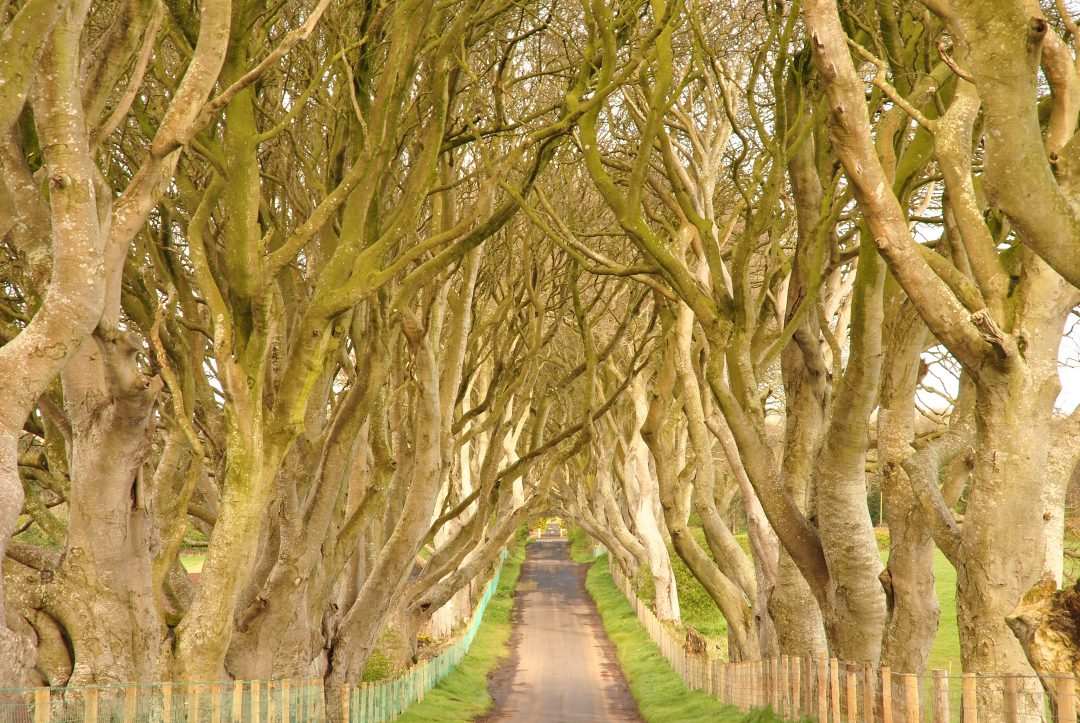 Dark Hedges, Northern Ireland Kingsroad