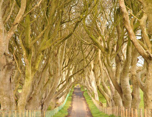 Dark Hedges, Northern Ireland Kingsroad